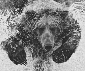 bear, photography, and blackandwhite image