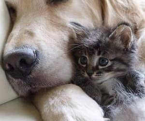cat, dog, and and cute image image