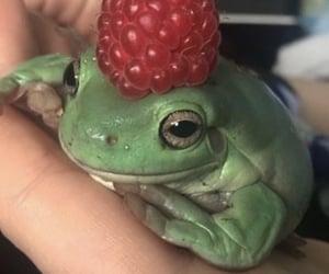 alt, animals, and berries image