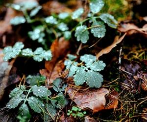 autumn, earth, and beautiful image