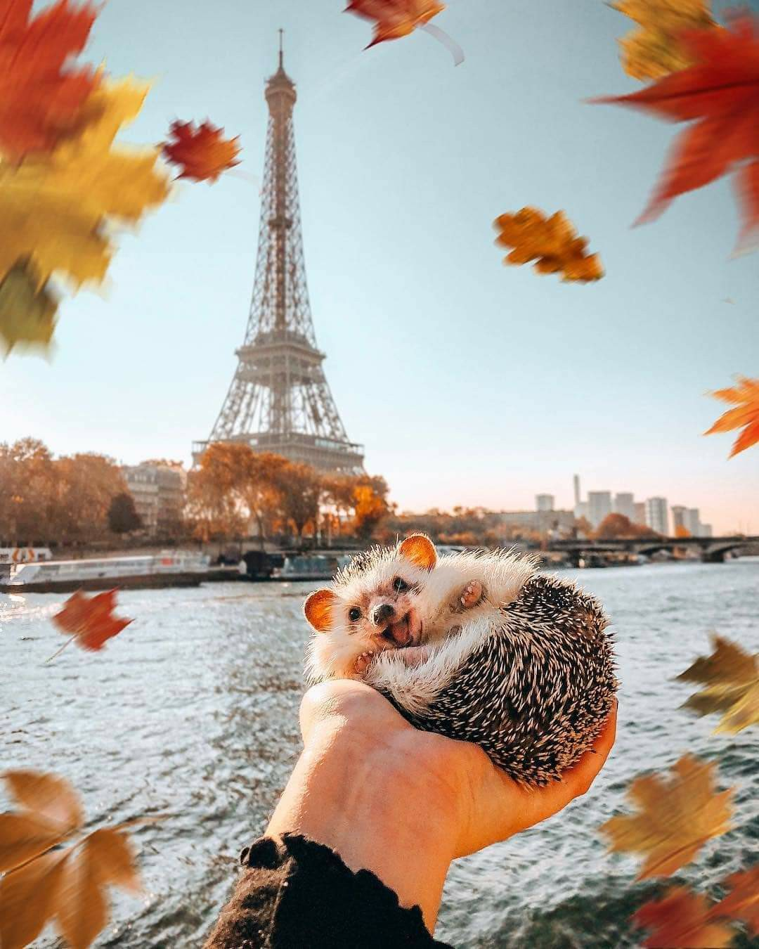 animal, autumn, and fall image