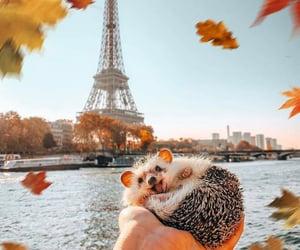 animal, autumn, and fall image