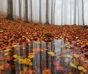 autumn, leaves, and leaf image