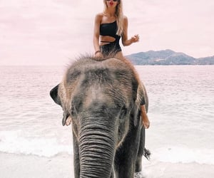 adorable, animals, and elephant image