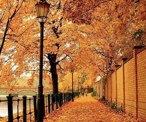 autumn, Halloween, and evening image