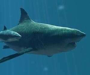 great white, sharks, and megolodon image