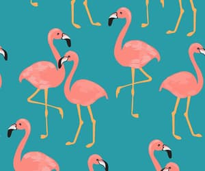 aves, flamingos, and rosa image