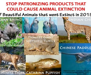 save the planet, world eco brands, and save the earth image