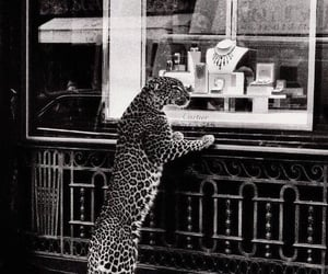 cartier, black and white, and animal image
