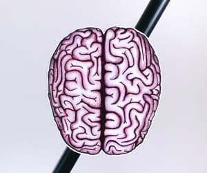 brain, magnet, and etsy image