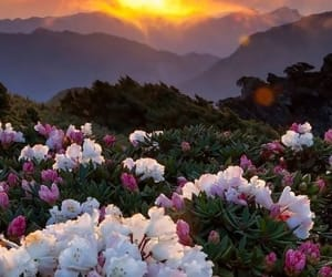 amazing, flowers, and hill image