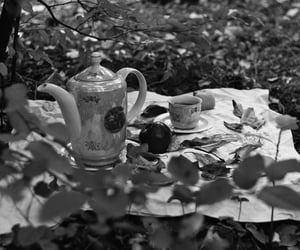 autumn, film, and black and white image