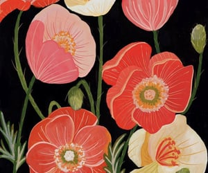 coral, flowers, and poppies image