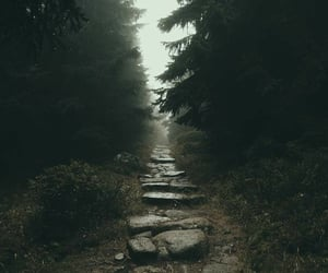creepy, forest, and photography image