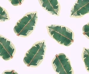 background, leaves, and pattern image