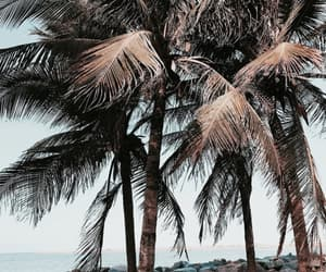beautiful, palm trees, and love image