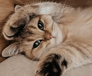 kitty, cute, and animal image