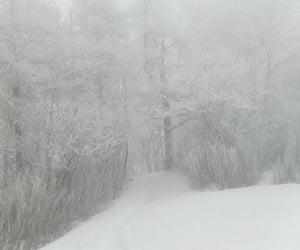 aesthetic, forest, and snow image