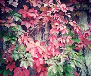 art, beatiful, and autumn image