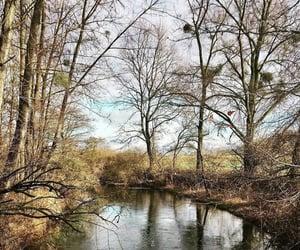 abandoned, forest, and lake image