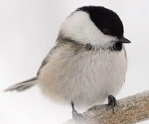 bird, snow, and white image