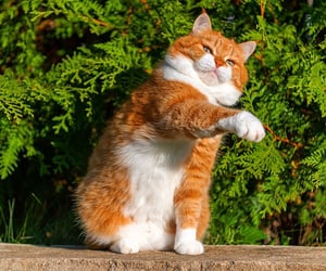funny cat, animals, and cat image