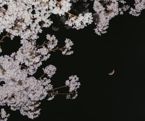 aesthetic, cherry blossom, and night sky image