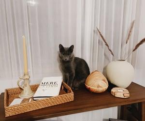 autumn, decor, and grey cat image