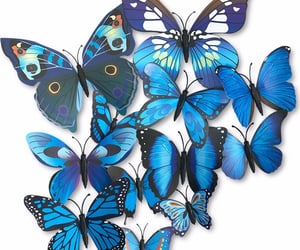 air, beautiful, and butterflies image