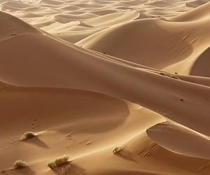 sand, Hot, and sable image