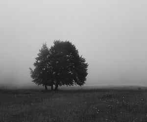 black and white, land, and tree image