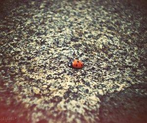 ladybug, nature, and macro image