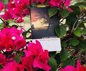 book, wuthering heights, and my book image
