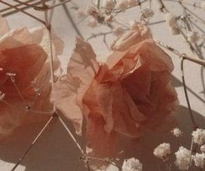 flower and header image