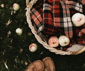 apples, fall, and foliage image