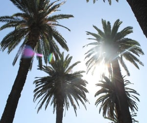 aesthetic, palm tree, and tropical image