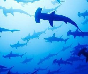 aesthetic, sharks, and wonderful image