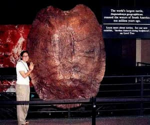 massive history, world's largest turtle, and dat some big shell image