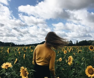 field, summer, and sunflowers image