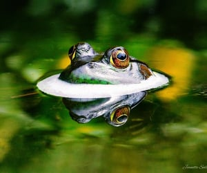 animals, green, and pond image