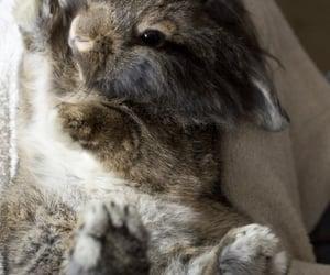 bunnies, loveislove, and sleeping image