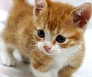 Sooooo cute.........🐾😍❤️❣️‼️