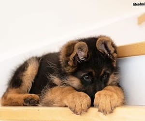 black, puppy, and cuddly image