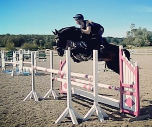 black, equine, and jump image