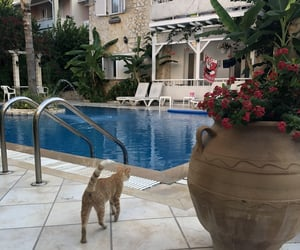 Greece, pool, and cat image