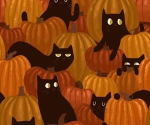 pumpkin, black cat, and Halloween image
