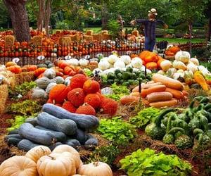 food, nature, and pumpkins image