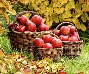apples, baskets, and FRUiTS image
