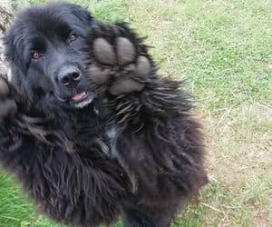 black, dog, and energy image