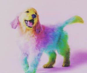 arcoiris, perrito, and can image